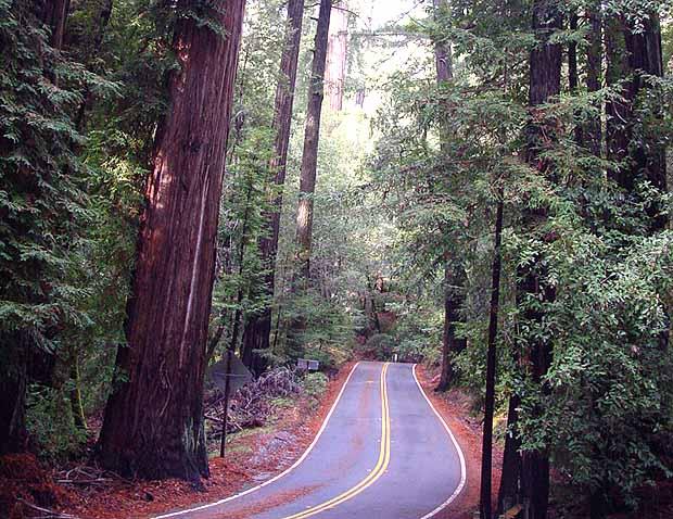 bigbasinredwoodstatepark.jpg